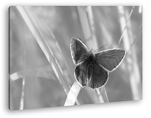 deyoli Kleiner Blauer Schmetterling Format: 80x60 Effekt: Schwarz/Weiß als Leinwand, Motiv fertig gerahmt auf Echtholzrahmen, Hochwertiger Digitaldruck mit Rahmen, Kein Poster oder Plakat