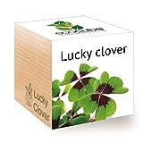 feel green ecocube lucky - quadrifoglio portafortuna per coltivare il proprio kit, pianta in un cubo di legno realizzato in austria, regalo originale e sostenibile (100% ecologico)