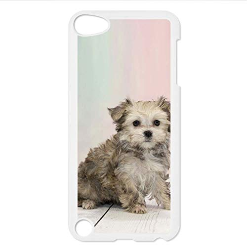 Unusual for Men Compatible with Apple Touch 5 Print Teddy Bear Dog Rigid Plastic Phone Case Choose Design 140-1