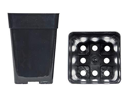 Geosism & Nature Vases carrés 10x10x14 cm (10 pièces), Compagnie Arca
