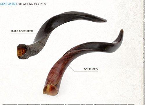 "shofarot Israel Kosher Yemenite Kudo Kudu Schofar Mini Größe 21""23"" Full Polish"
