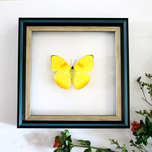 GEEZEZU-fotolijst voor foto A vlinder met blauw vlindermotief, motief: verjaardagskaarten voor decoratie van het huis – materiaal van glas PS3