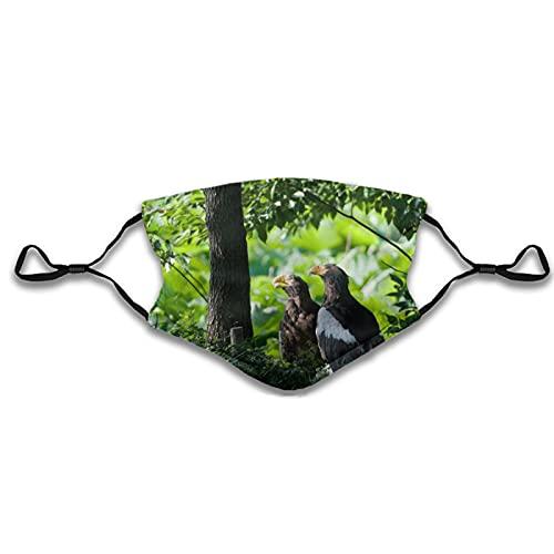 Reebos Pájaros Predatory Grass Hide Wood Fashion Face Ma-sk con bolsillo filtro lavable cara bandanas pasamontañas reutilizable tela Ma-sk con 2 filtros
