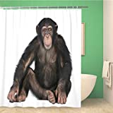 Awowee Duschvorhang Affe Junge Schimpanse Simia Troglodytes Jahre alt vorn, 180 x 200 cm, Polyester-Stoff, wasserdicht, Badvorhang-Set mit Haken für Badezimmer