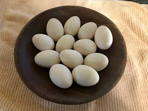 Duck Eggs, Fertile Eggs, 6 Eggs