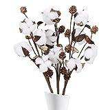 HUAESIN 3pcs Ramo de Flores Secas Naturales Blancas Rama Algodon Artificial Decoracion Flores de Algodon Natural para Jarrones Damajuana Hogar Fiesta Boda Centro de Mesa Balcon Terraza