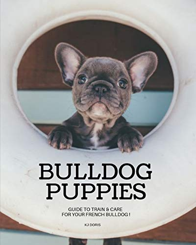 Bulldog Puppies : Guide to train & care for your french bulldog