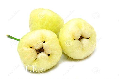 160 graines de la fusion 8 couleurs les Callos fruits semences de légume fournitures mieux dans la maison et jardin de plantes gardensemillas