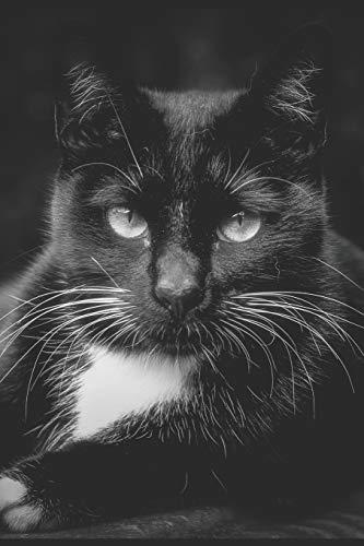 The Black Cat Journal