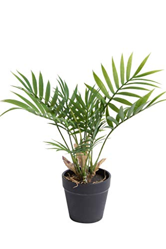 Botanic-Haus Kunstpflanze (Palme, Ficus, Schefflera, Akuba, Croton) Höhe ca. 30 cm im schwarzen Kunststofftopf (Chamaedorea Palme grün)