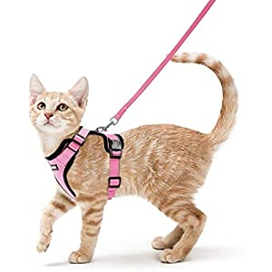Best Cat harness for your cat or kitten