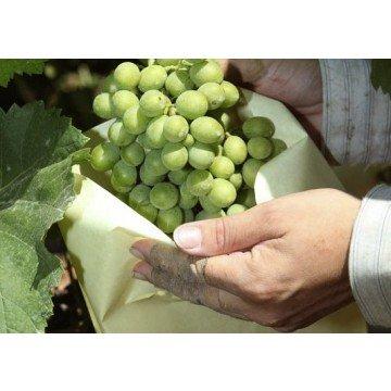 Tecnologías Agrarias 100 Bolsas Protectoras para Uvas (40