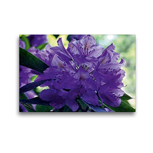 CALVENDO Premium Textil-Leinwand 45 x 30 cm Quer-Format Lilaner Rhododendron im Garten, Leinwanddruck von Martina Cross