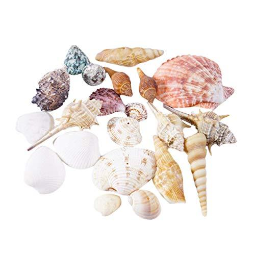 QULONG Acquario Decorazioni da Giardino Conchiglie di Mare Conchiglie Miste da Spiaggia per la Spiaggia Festa a Tema Acquario di Matrimonio Decorazioni da Giardino Artigianato Fai-da-Te Fabbricazio