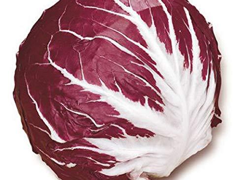 Palla Rossa 2 Radicchio 300 Samen Sehr Tasty etwas Farbe & Zip Ihre Salate hinzufügen