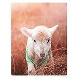 YISUMEI Flauschige Decke 150x200 Bett Kuscheldecke Sofa Wohndecke mit Motiv Gras Kleines Weißes Schaf