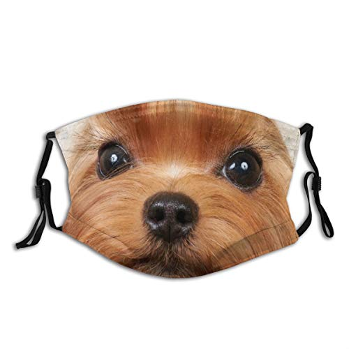 LISUMAL Face Cover,Grooming Brown Dog Yorkshire Terrier Lange kostbare wimpers Wildlife Show Yorkie Pet,Anti Dust Mouth Bandanas Outdoor Camping Motorfiets Running Neck Gaiter Met 2 Filters