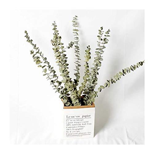 CCAN Natürliche getrocknete Blume Eukalyptus Blätter Dekorieren Haus Esstisch verschönert Hochzeitsfestliche Versorgung Home Decoration (Farbe : Grün)