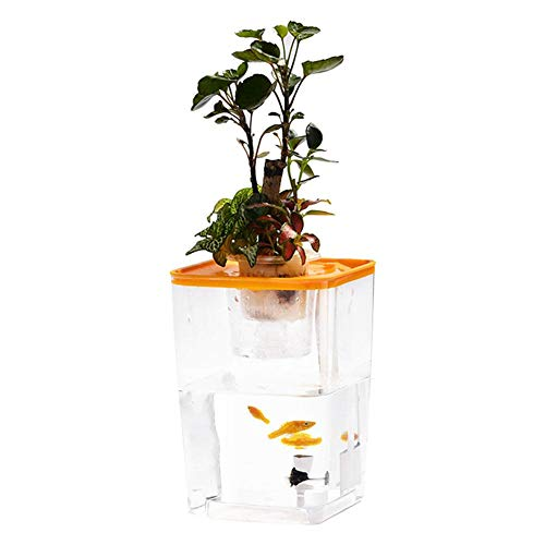 Bloomma Water Garden, Betta Fish Tank Que cultiva Plantas, Mini ecosis