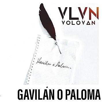 Gavilán o Paloma