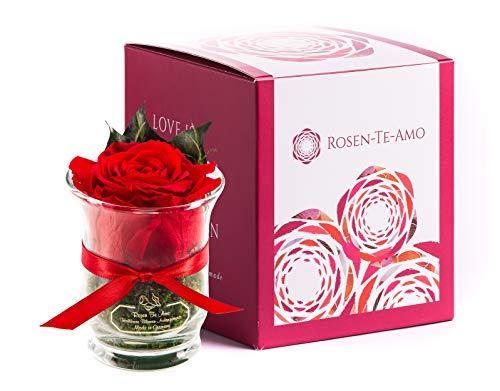 Rosen-Te-Amo, duftende Premium konservierte ewige Rose rot in Vase handgefertigt mit echtem Bindegrün in feiner Geschenk-Box (neu). Infinity Rosen: Geschenke für Frauen & Deko Wohn-Zimmer