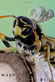 Best the wasp coloring pages Reviews