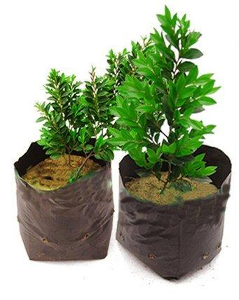 Mitefu Pots de chambre d'enfant Plant-fiber Seedling-raising Sacs Jardin Fournitures Sac de chambre d'enfant en plastique, Noir (100), Noir, W20\
