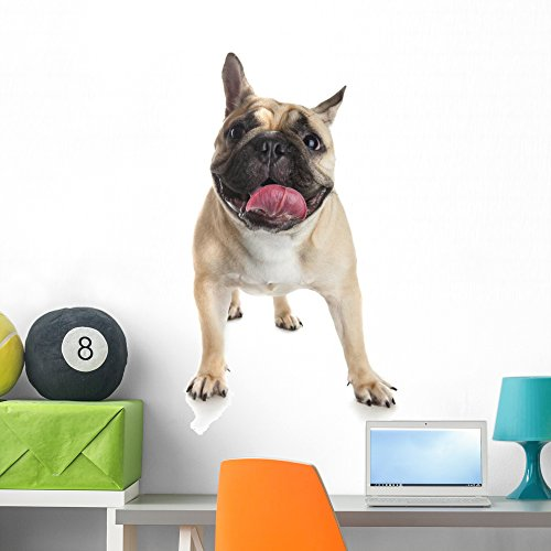 Wallmonkeys French Bulldog White Wall Decal Peel and Stick Graphic (36 in H x 25 in W) WM359393