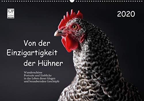 Von der Einzigartigkeit der Hühner 2020 (Wandkalender 2020 DIN A2 quer)
