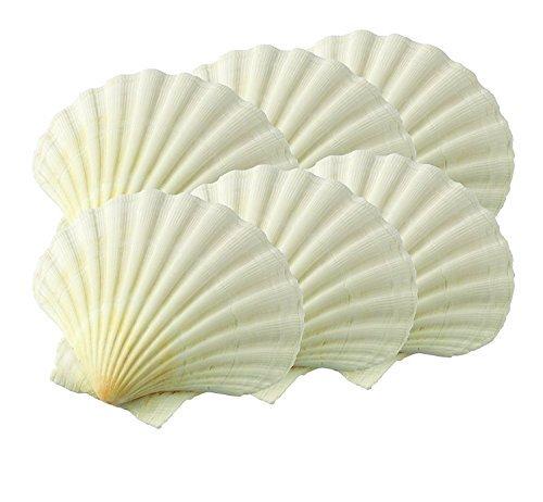 Irish Baking Scallop Shells - Case Pack 6