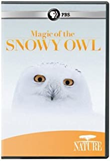 Best magic of the snowy owl Reviews