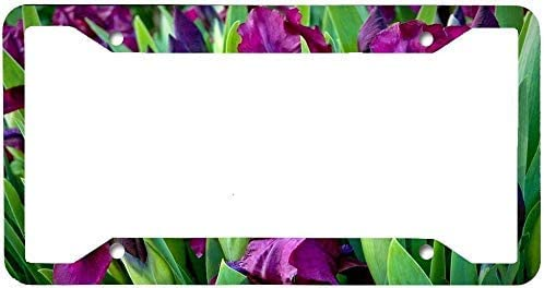 DKISEE License Plate Frame Stainless Steel Purple Irises Attention Ranking TOP9 brand Flowers