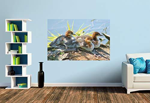 Premium Foto-Tapete Gänsesäger Küken (versch. Größen) (Size S | 186 x 124 cm) Design-Tapete, Wand-Tapete, Wand-Dekoration, Photo-Tapete, Markenqualität von ERFURT