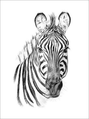 Posterlounge Holzbild 70 x 90 cm: Zebra-Skizze von Editors Choice