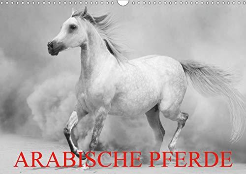Arabische Pferde (Wandkalender 2021 DIN A3 quer)
