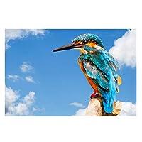 Suuyar 鳥のポスターとプリント壁アートキャンバス絵画家の装飾リビングルームの壁の装飾のためのカラフルなカワセミの写真-50X70Cmフレームなし