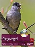 Singvögel: Vorkommen, Lebensweise, Gesang