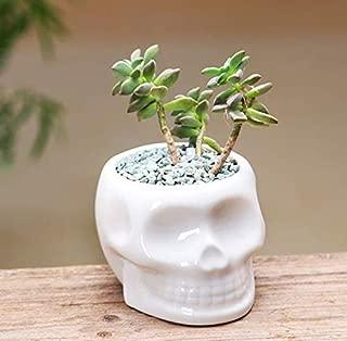 Best ceramic skull vase Reviews