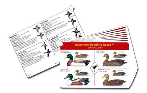 Ident-I-Cards Aves Acuáticas Set de Patos y Gansos de Agua