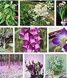 Promotion Vente! Types 100 mix Février Lan Graines vivace Fleur pour Jardin en Bonsai, acheter 2 obtenir 1 gratuit gife...