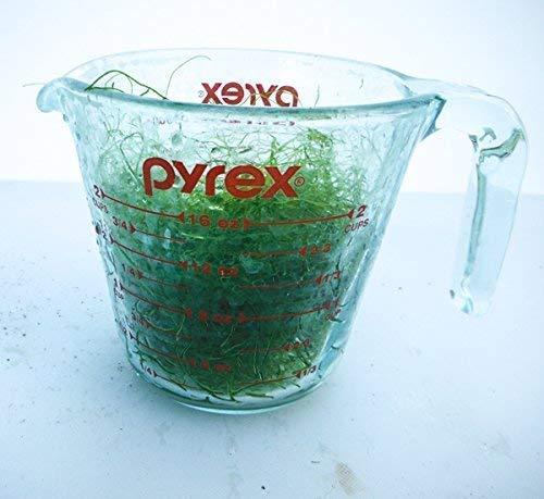 AQUACULTURE NURSERY FARMS Chaetomorpha Macro Algae 1 Cup. Copepod Amphipod Habitat. Saltwater Plants
