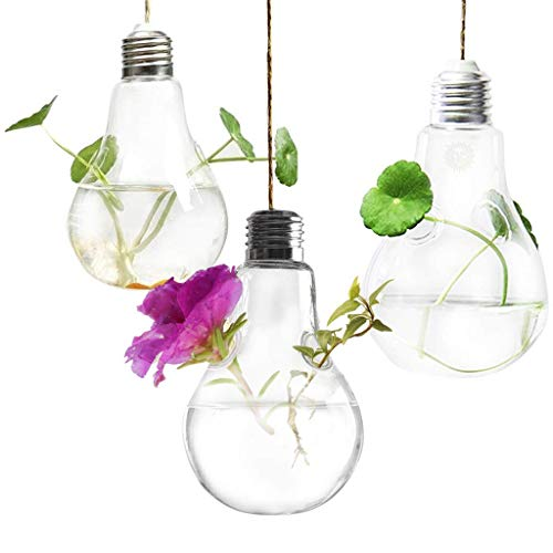 Lightbulb used as plant holder