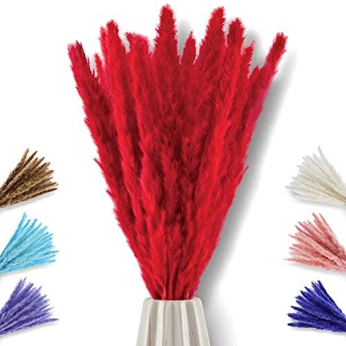 pamindo Pampasgras klein getrocknet & sehr lang als Deko in Vase - 75 cm Länge & leicht kürzbar - Natürliche Trockenblumen weich & fluffig in rot