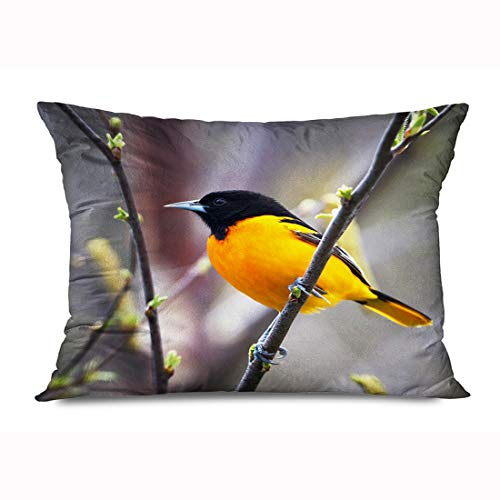 FUEWU Throw Pillow Cover Queen 20x30 Inches Colorful Bird Baltimore Oriole Perched On Budding Tree Black Animals Wildlife Nature Orange Spring Decorative Zipper Pillowcase Home Decor Cushion Case