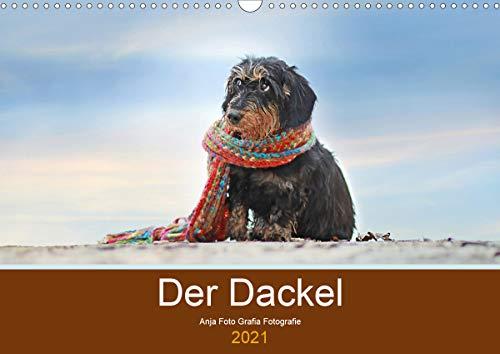 Der Dackel (Wandkalender 2021 DIN A3 quer)