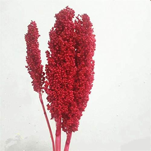 Natürliche getrocknete Blumen Getrocknete Sorghum Blumen aufbewahrt Bunte echte Körnung Weizenohren natürliche Pflanze Hochzeitsdekor Home Eröffnung Gerste Haltbarkeit ist real (Color : Pink)