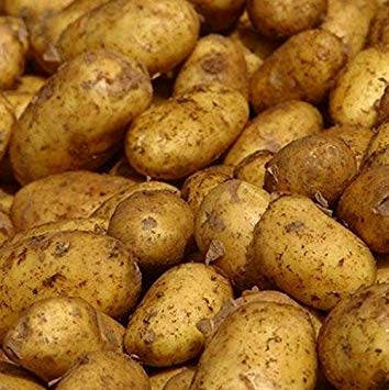 Shop Meeko Trading Seed Potatoes Maris x 10 Tubers. One of The Best Known and Popular Potato Varieties Today. Often Cal ?The chippies cho? Because of its