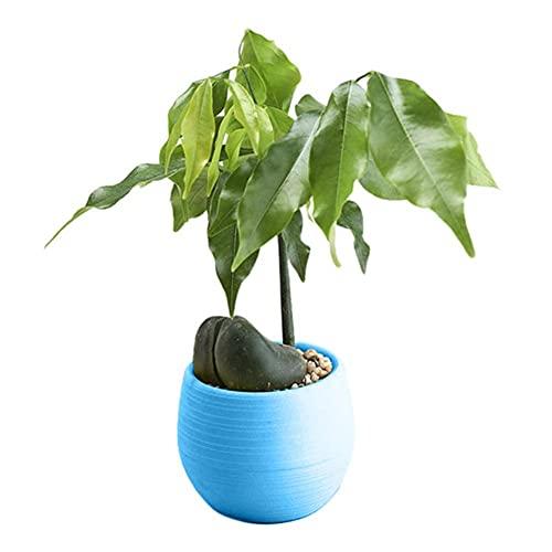Maceta de 1 Pieza Mini macetas de Plantas de plástico Redondas y Coloridas Macetas de decoración de Dormitorio de Oficina en casa Macetero Agradable Manualidades Decorativas-Azul, Estados Unidos