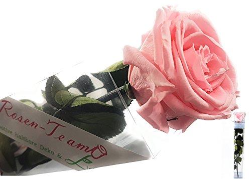 Rosen-Te-Amo – Echte haltbare rosa Rose - mit herunterladbarer Grußkarte; Infinity Rosen - Deko und Geschenk geliefert in neue verstärkte Verpackung