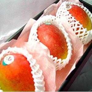 【お中元】 メキシコ産 アップルマンゴー 3個 (1個400g〜450g) 化粧箱入り【のし付】